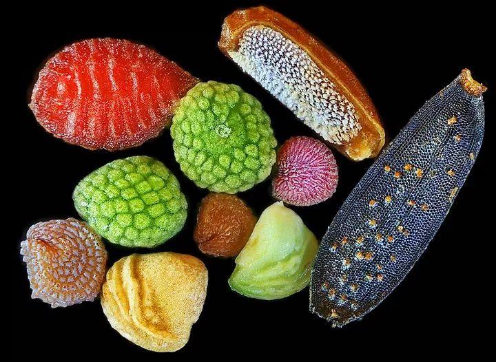 奇妙!显微镜下拍摄的植物种子照片