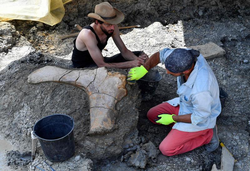 法國發現較完整食草恐龍股骨化石